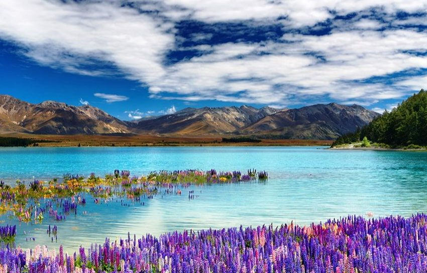 6 New Zealand Places You Need to Visit